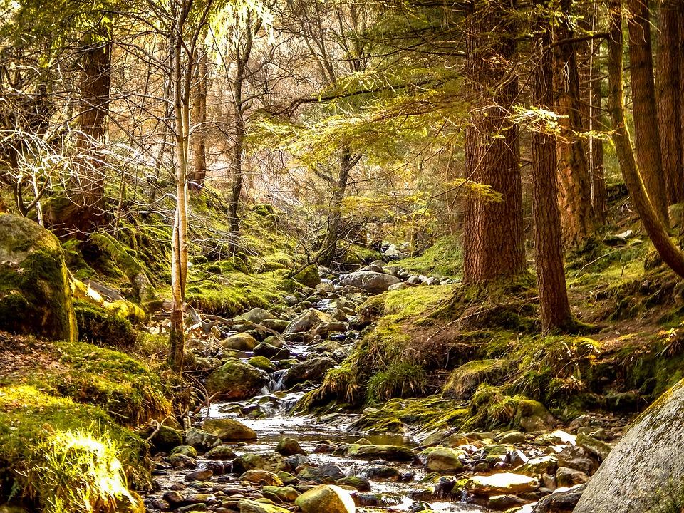 renfrew forest landscape